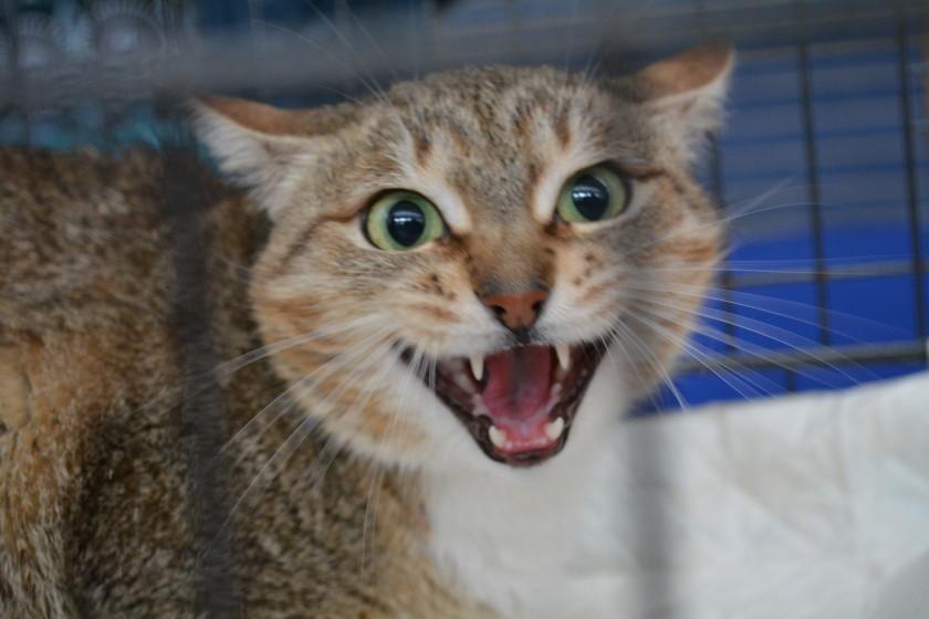 бездомная кошка акция