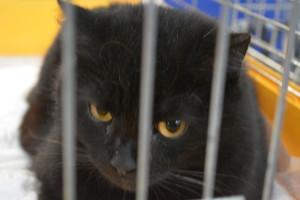 кошка британская акция бездомная Минск