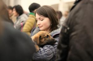 бездобная собака животное