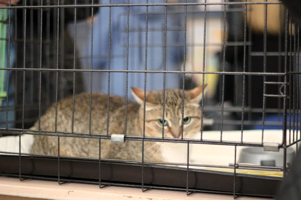 "Бездомная кошка акция ""Эгида"""
