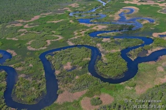Река Березина перед впадением в озеро Палик. Березинский биосферный заповедник. 15 мая 2015 года.