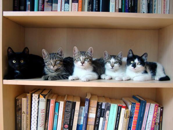 котэ-коты-5-книги-681062-950x713
