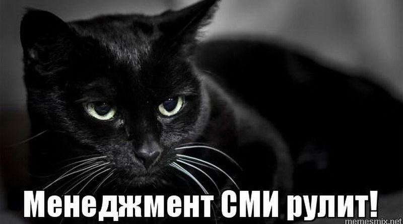 День открытых дверей: как «менеджмент СМИ» заманивал абитуриентов на журфак чаем, сладостями и черным плюшевым котом