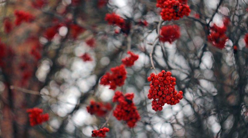Зима в городе: фото из Instagram белорусов в первый день декабря