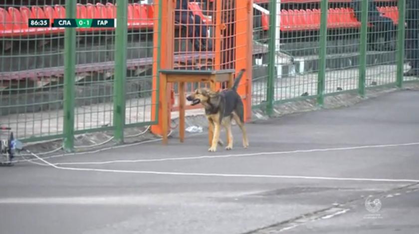 Славия - Городея. Собака на футбольном поле