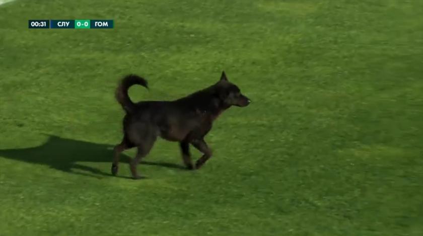 Слуцк - Гомель. Собака на футбольном поле