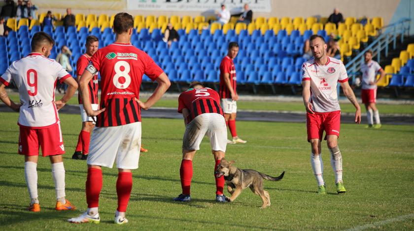 Лида - Белшина. Собака на футбольном поле