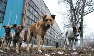Бездомные собачки